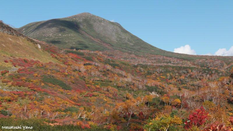 高原沼コース紅葉の樹海