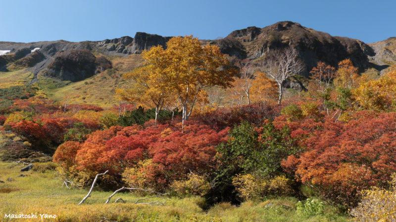高原沼の紅葉