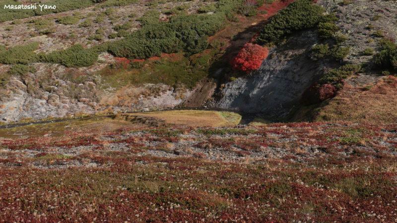 黒岳の紅葉とチングルマ