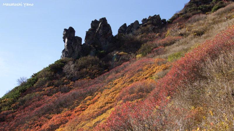 黒岳9合目付近の紅葉