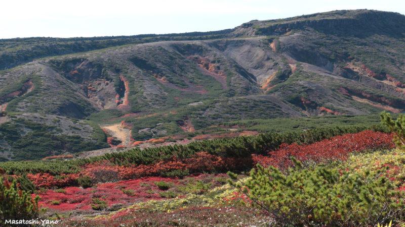お鉢平の山道の紅葉