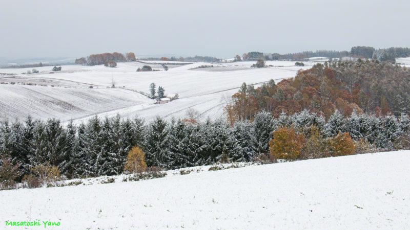 新栄の丘の初雪