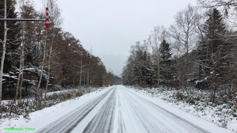 白樺街道、今シーズン初の根雪