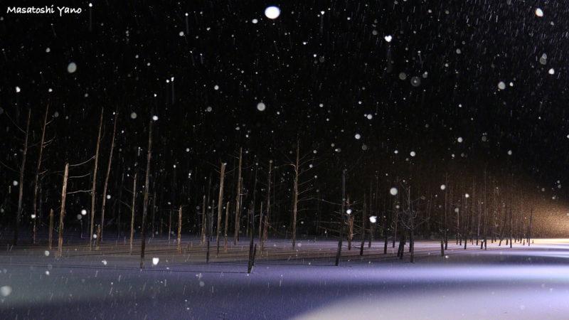 青い池のライトアップと大雪