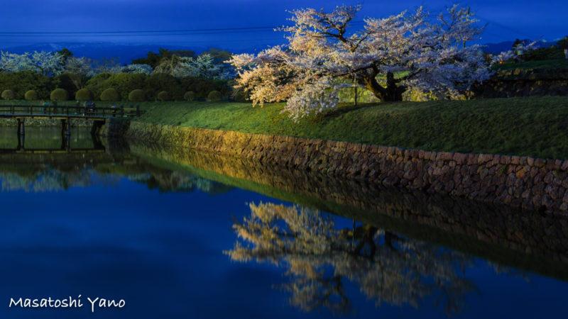 五稜郭タワー 桜のライトアップ写真