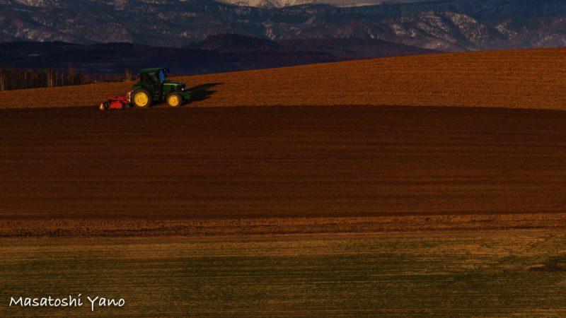 美瑛の丘で夕方まで稼働しているトラクター