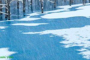 青い池と雪