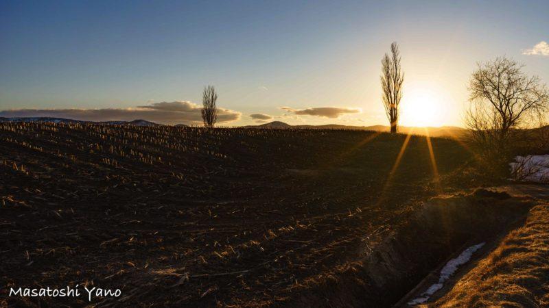夕方に撮影した太陽と春の美瑛の丘