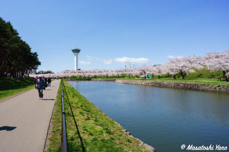五稜郭公園 桜の散歩道