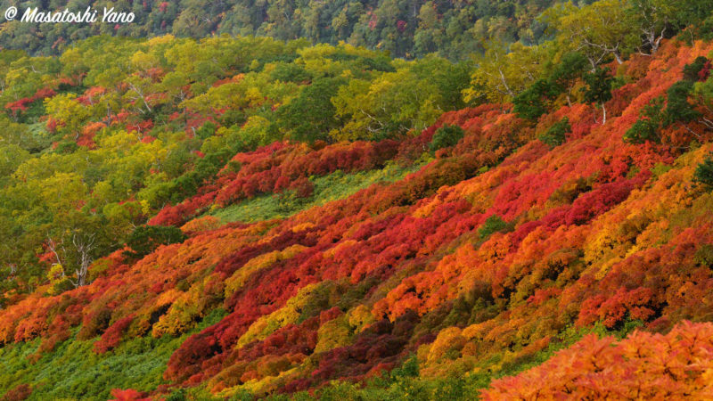 まねき岩の辺りから見おろした紅葉