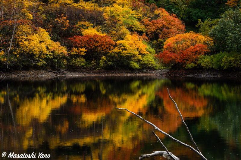 高原温泉沼めぐりコース、エゾ沼の紅葉