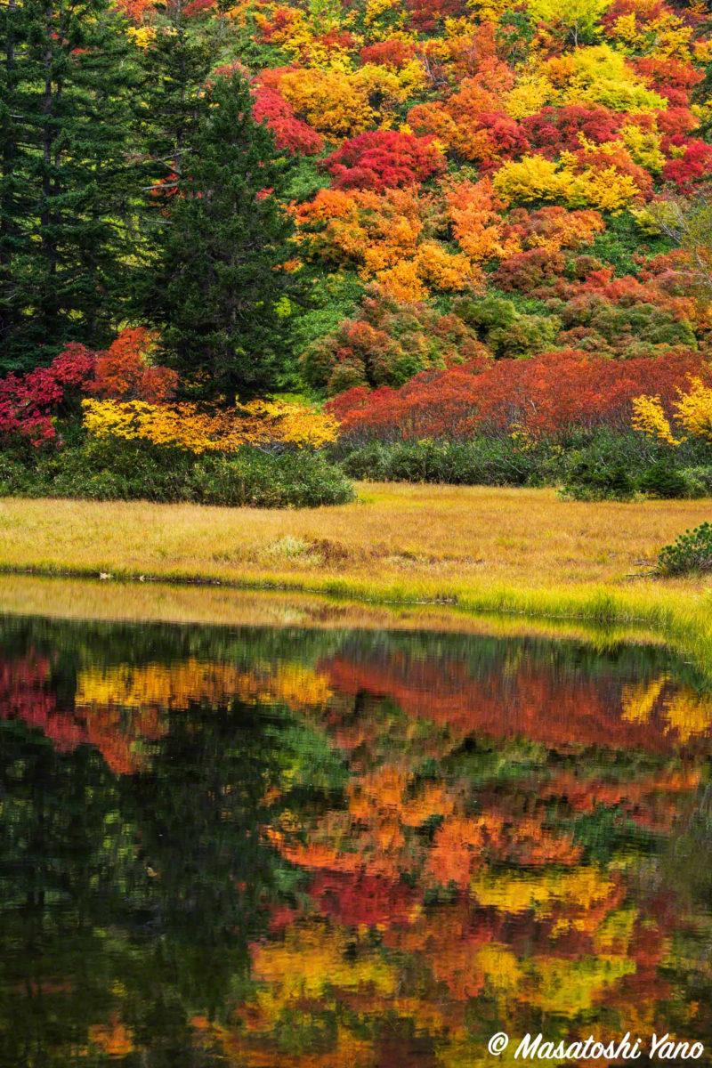 雨上がりの滝見沼の紅葉