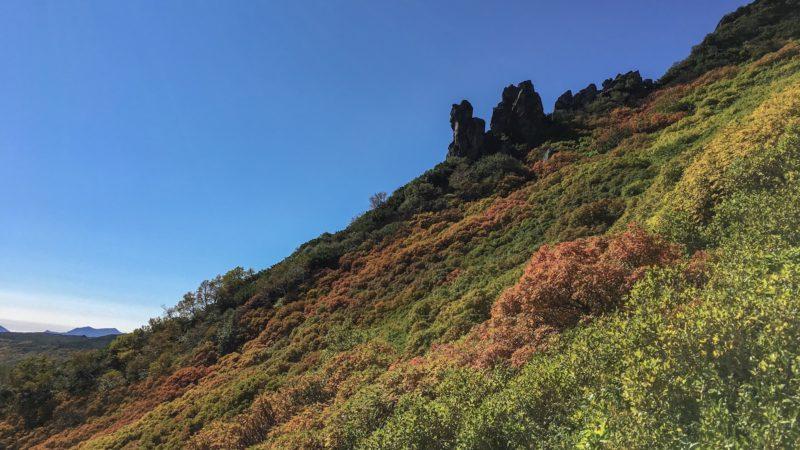 黒岳9合目付近の紅葉の様子