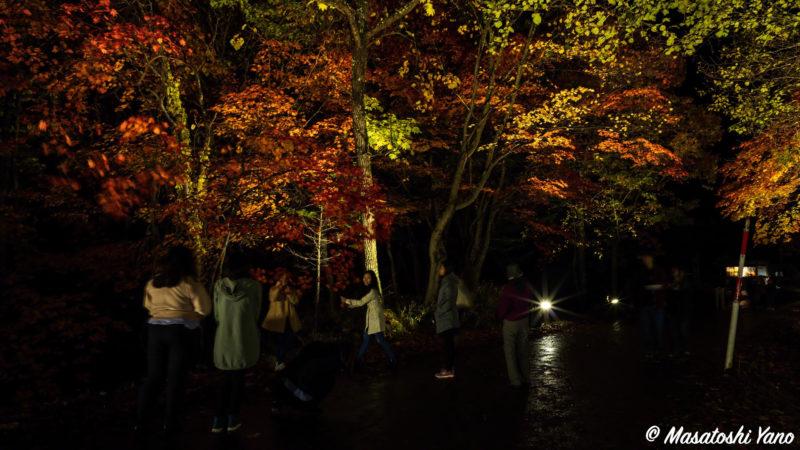 紅葉のライトアップでポーズを撮っている人