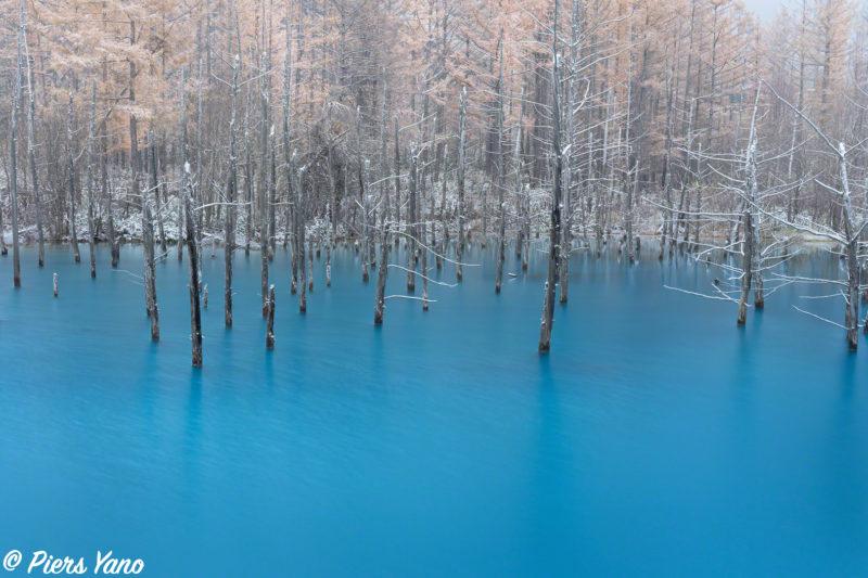 2019年の青い池の初雪