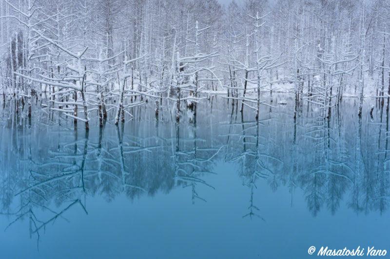 初雪が解けて、ふたたび雪が降った青い池