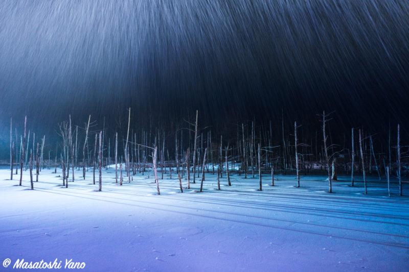 4月なのに吹雪いている青い池のライトアップ