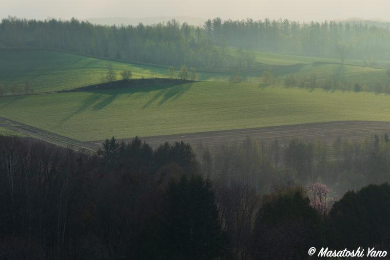 霧がかかった美瑛の丘