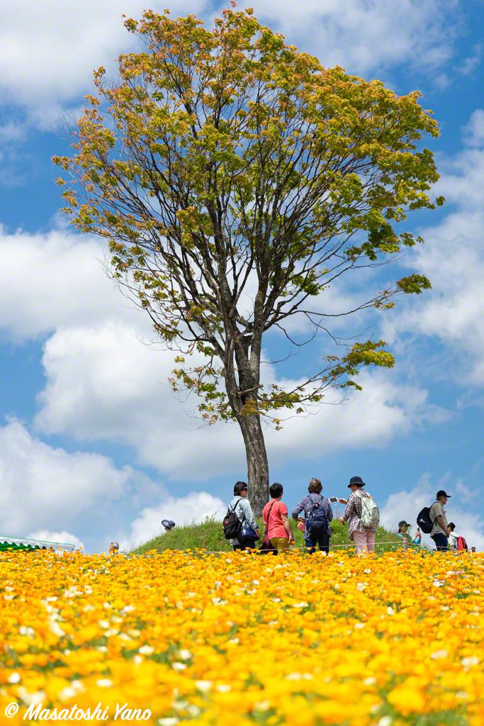 四季彩の丘 一本の木