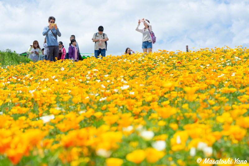 四季彩の丘 花畑