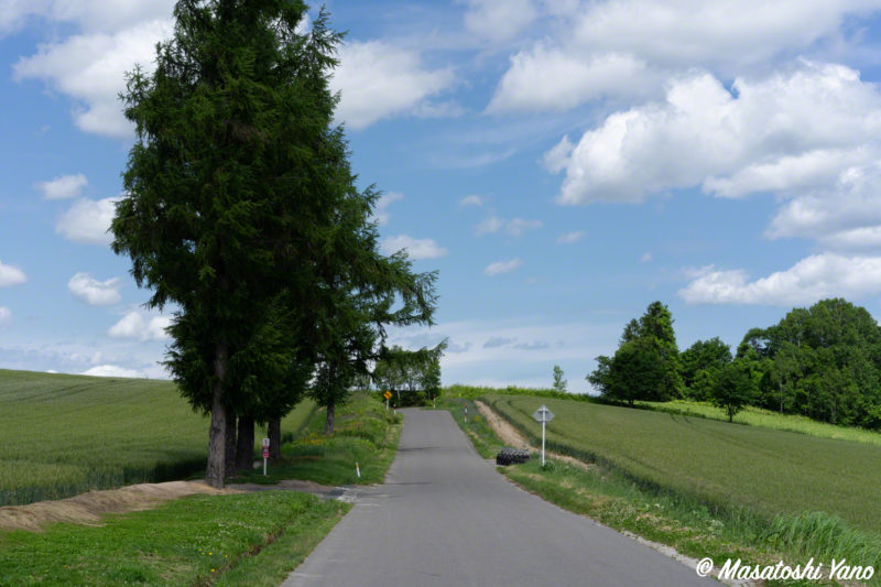 マイルドセブンの丘 道