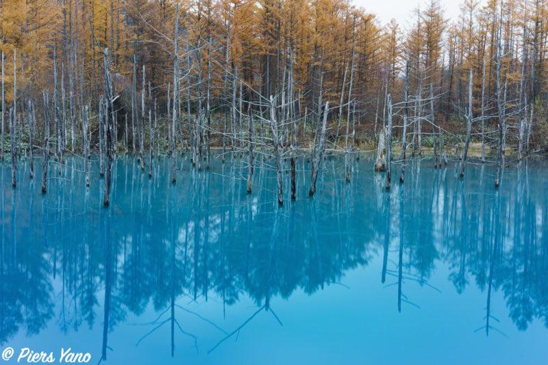 青い池で初雪が降る直前